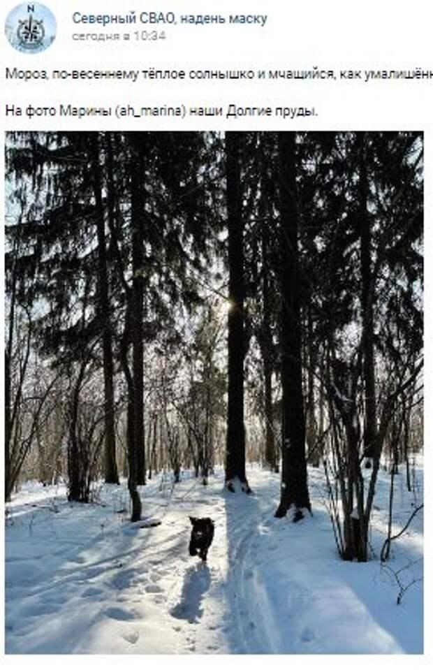 Фотокадр: пёс радуется снегу на Долгих прудах