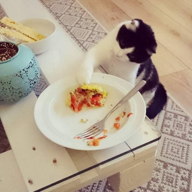 10. Когда на минуту оставил свою тарелку без присмотра  жизнь, кошка, ситуация