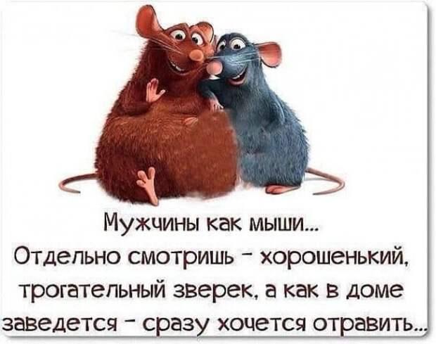 Возможно, это изображение в мультипликационном стиле (текст «мужчины как мыши... отдельно смотришь- хорошенький, трогательный зверек, a как в доме заведется сразу хочется отравить...»)