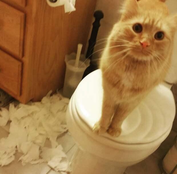 15. Когда забыл закрыть дверь в туалет  жизнь, кошка, ситуация
