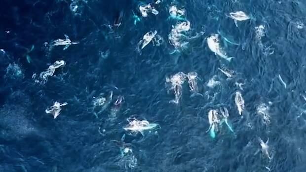 Стая горбатых китов окружила яхту у берегов Австралии