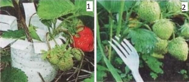 Подпорки под клубнику, чтобы ягоды не гнили