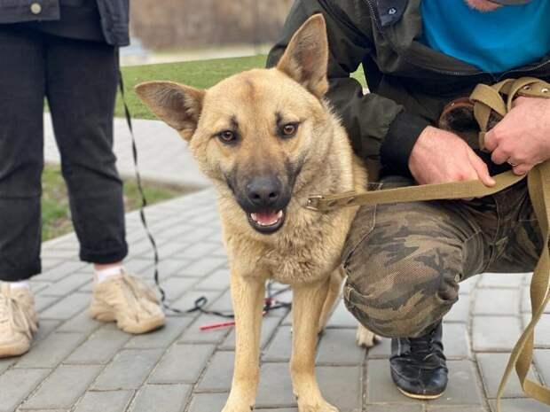 Обходя вольеры передержки, мужчина не скрывал чувств — он обнимал собачек