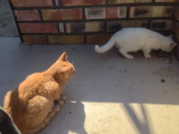 Очень старая история про кошку Марусю