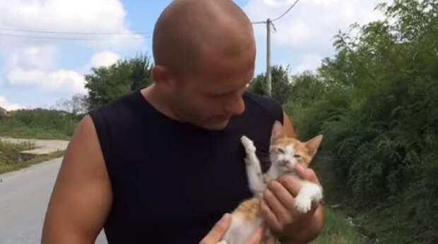 Один из котишек погиб, а второй метался у дороги, ожидая помощи