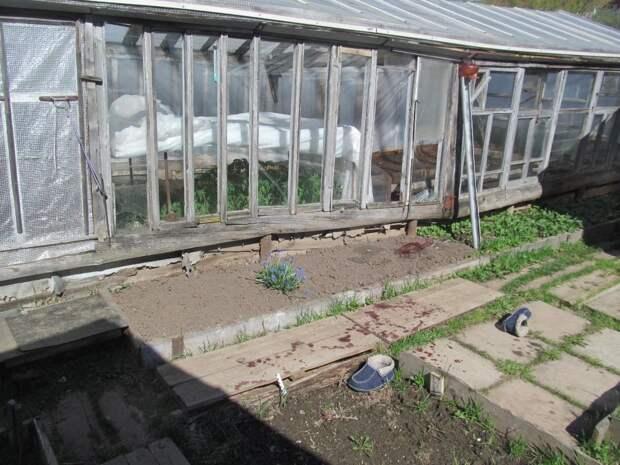 Поранившийся стеклом от теплицы пенсионер из Глазова скончался от потери крови