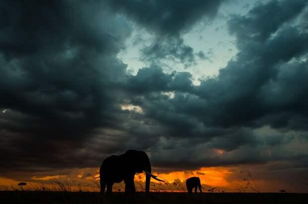 afrikanskie zakaty 7 Потрясающие африканские закаты от Пола Гольдштейна