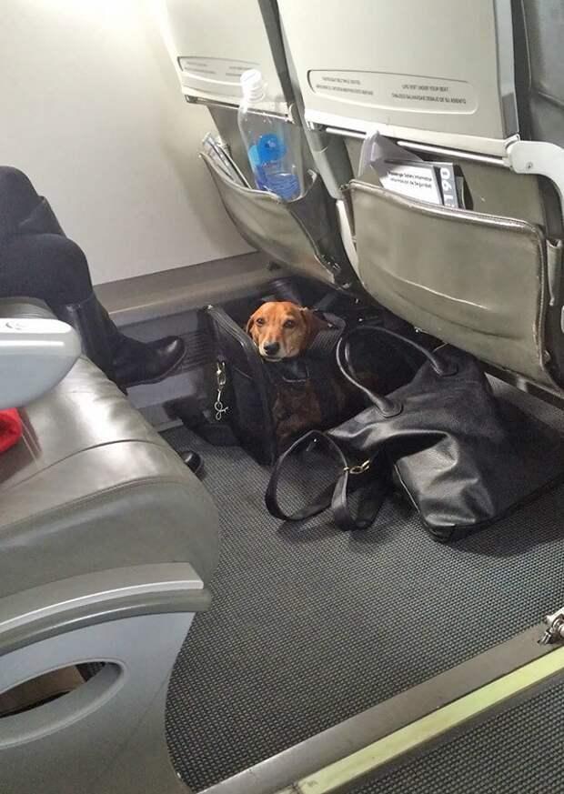 Я в домике! животные, забавно, летайте самолетами, мило, пассажиры, самолет, собаки, хвостатые пассажиры
