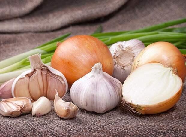 Особенности подкормки лука и чеснока дрожжами: преимущества и недостатки, популярные рецепты