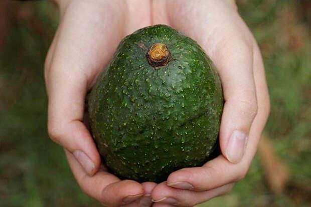 Купил авокадо и облажался? Научим определять зрелый фрукт с первого взгляда