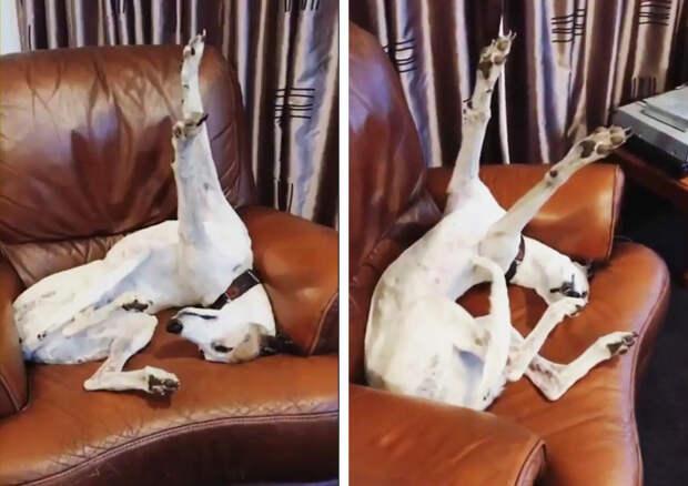 20+ собак, которые попали в кадр в самый неожиданный для них момент