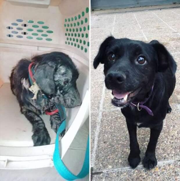 До и после: фотографии спасённых собак