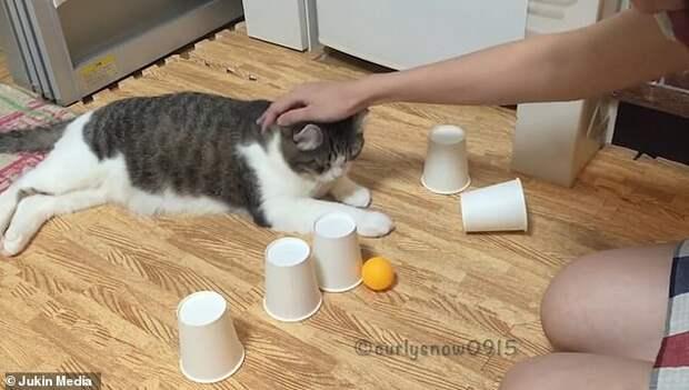 В эту игру человек всегда будет проигрывать кошке