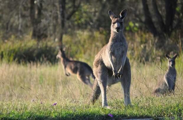 Сумка кенгуру: как она выглядит внутри