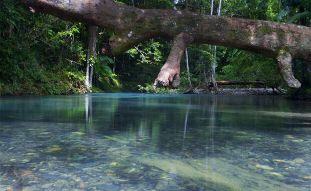 Лес Дейнтри Австралия К северу от Брисбена расположен один из самых сказочных лесов мира. Тысячелетние деревья растут здесь вперемешку с древними папоротниками — исследователи утверждают, что им более 110 миллионов лет. В глубине джунглей возвышается несколько небольших гор, с вершины которых открывается весьма величественный вид.