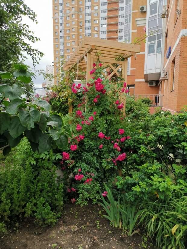 Цветовод из дома на Дмитровке раскрыла секрет, как удалось обустроить знаменитый садик
