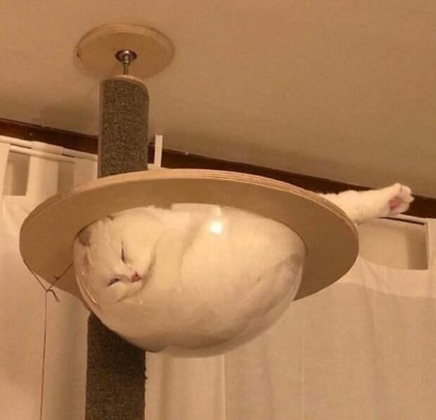 Ну, этого парня уже все видели! котики, коты, милота, мотики, сквозь стекло