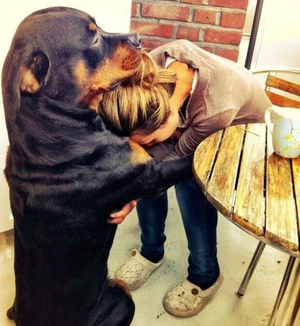 Эти трогательные снимки показывают бесконечную любовь cобак к своим хозяевам!