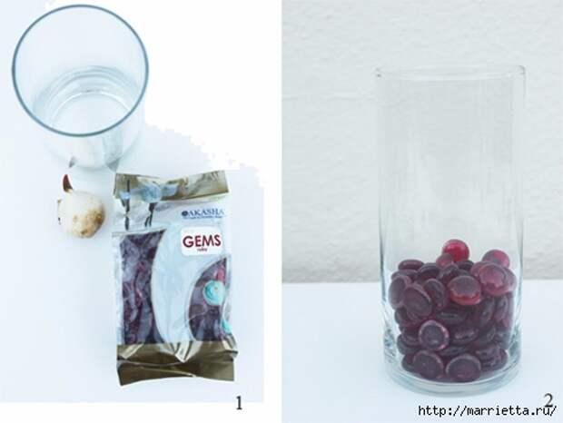 Выращивание тюльпанов в прозрачной вазе (1) (489x368, 77Kb)