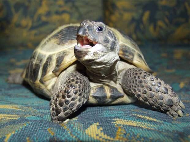 Кто бы мог подумать. От чего зависит пол черепахи! (фото) - MarketGid