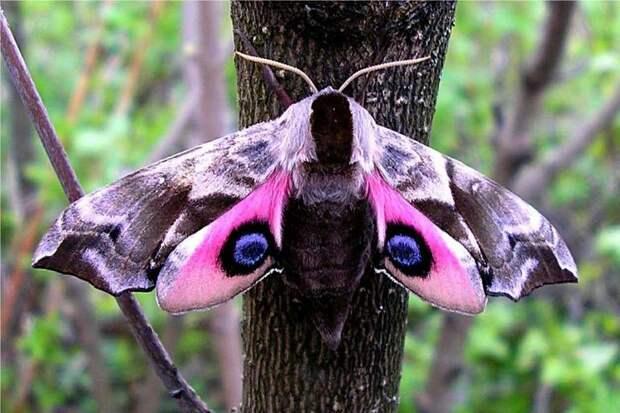 Какие насекомых редко встретить, но они существуют