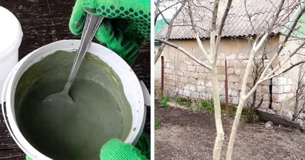 Добавьте этот компонент к побелке, и вредители больше не тронут деревья