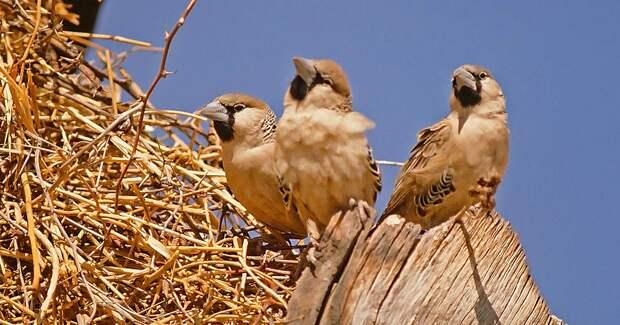 Большой труд маленьких птах