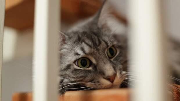 Швейную иглу достали ветеринары изогромного кота вРостове