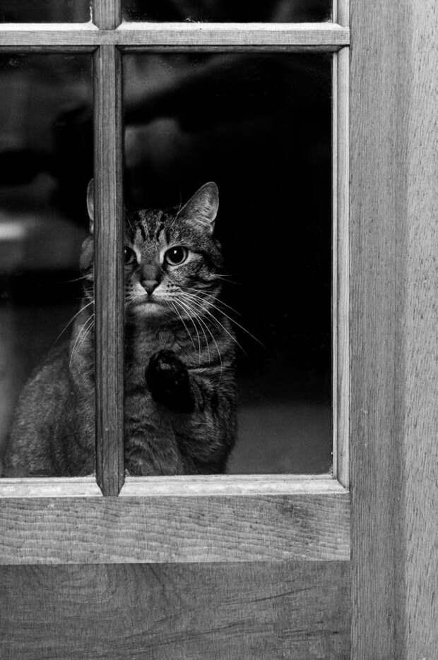 7238210-R3L8T8D-650-cat-waiting-window-62