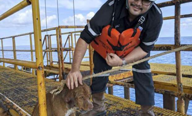 Собака проплыла 200 километров в океане, пока на помощь не пришли люди