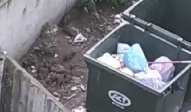 «Ихочень много»: петрозаводчане боятся выходить наулицу из-за огромных крыс