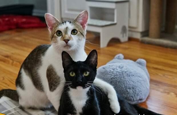 Кот обнял кошку
