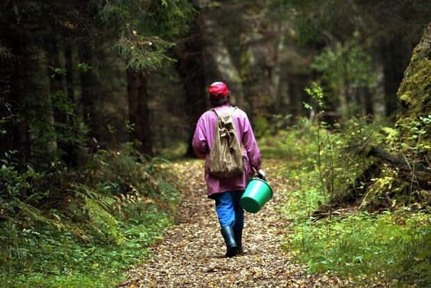 Лимит по сбору грибов — ещё один «очень важный демократический» закон