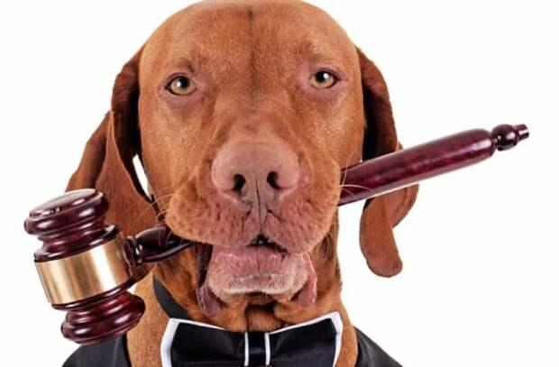 Исторический момент: Британский закон признает права животных