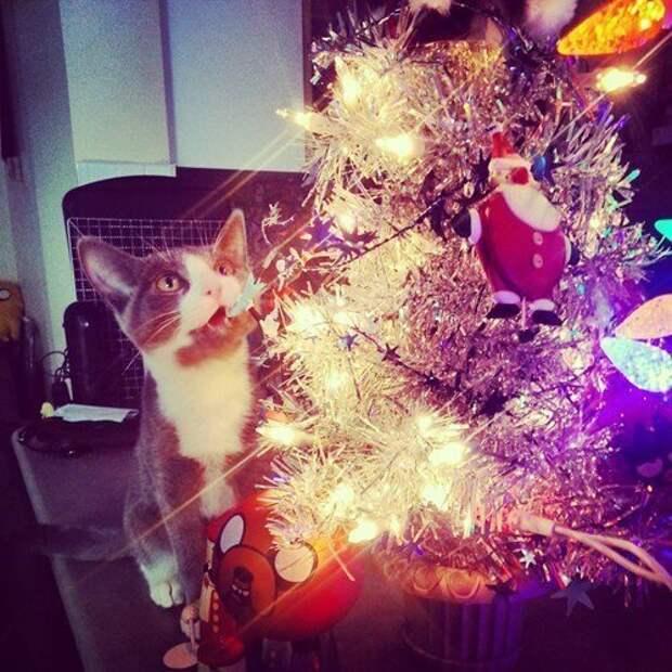 Сейчас я её все-таки достану животные, не любят, новый год, планы, смешные, фото