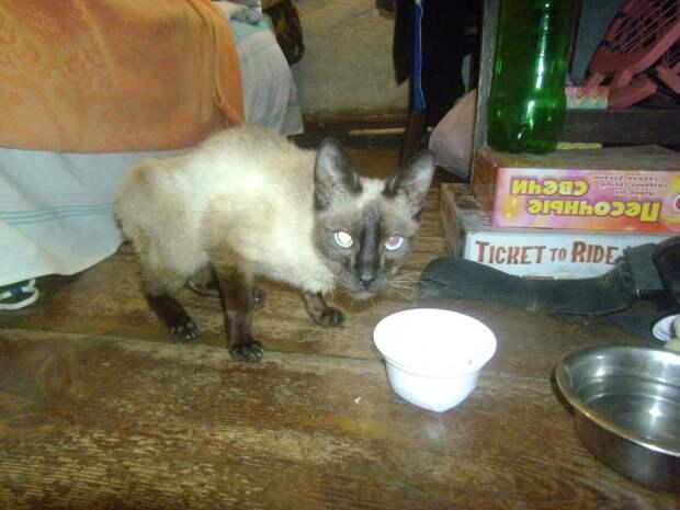 Стекло и кусочки мусора торчали в спутанной шерсти кошки. Она даже не могла открыть глаза