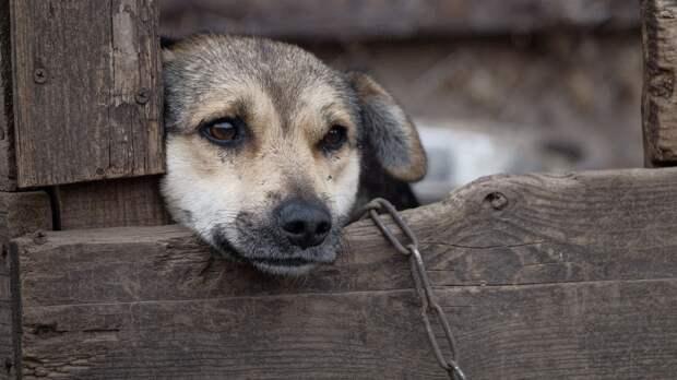 Пес спас хозяев от пожара в частном доме