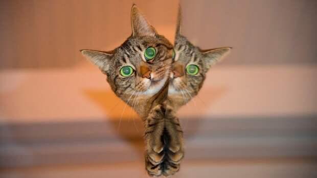 Американские ученые выяснили, что кошкам нравится сидеть даже в иллюзорных коробках