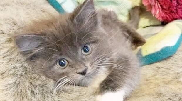 Особенный котёнок оказался брошенным. К счастью, судьба принесла крохе не только испытания, но и радость
