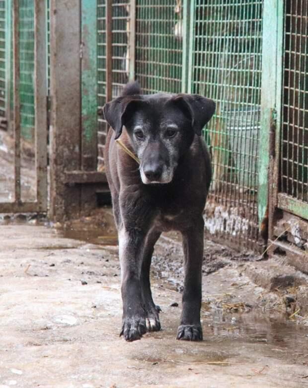 8 лет собака боялась не попасть в свой вольер: она была слепой