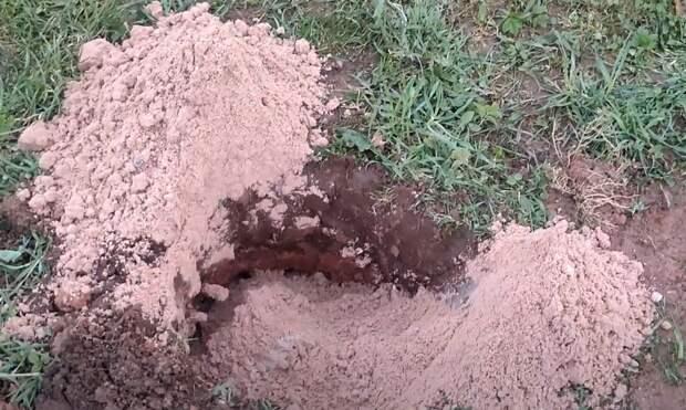 Как сажать растения на болоте в сложный глиняный грунт (текстовая версия)