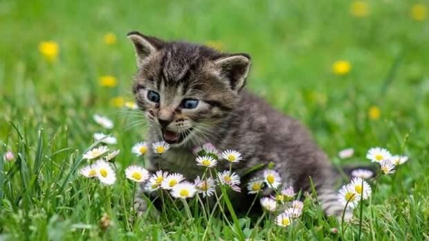 Бешеные кошки «отправили» на карантин два мордовских села