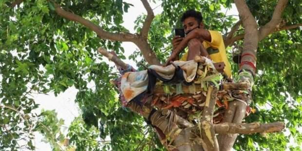 Индиец 11 дней прожил на дереве, чтобы не заразить семью COVID-19
