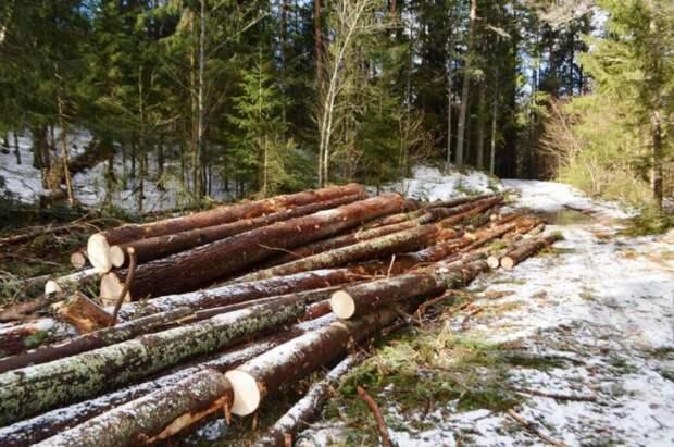 Архангельский депутат Дятлов назвал спорной мерой заморозку экспорта древесины