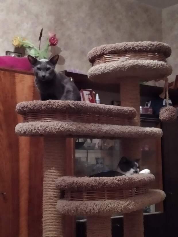 Личное пространство вашей кошки: почему это важно?
