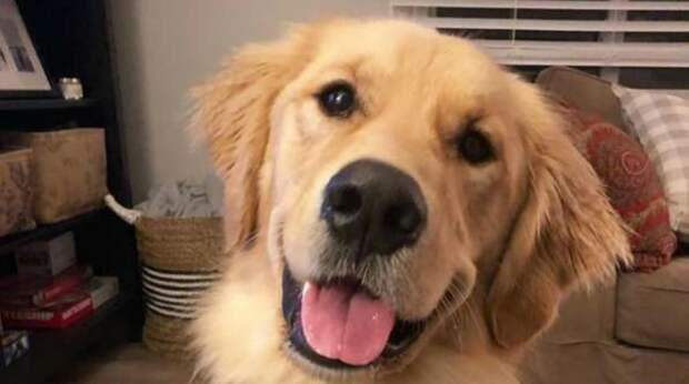 В округе появился новый почтальон и пёс решил сделать мужчину своим другом