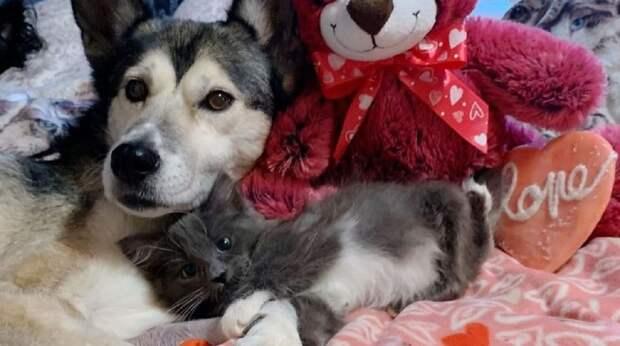 Чьи-то теплые лапы обняли одинокого котёнка. В этот момент малышка решила, что это её мама