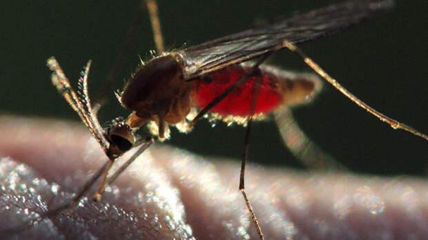 Россиянам угрожают комары-переносчики опасных вирусов из жарких стран