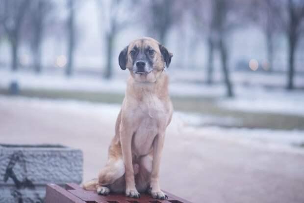Две неразлучные собаки оказались на улице, потому что стали не нужны хозяевам пара, приют, собаки, щенок