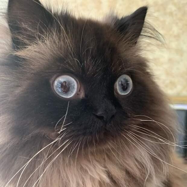 40 невероятно драматичных котиков, укоторых почему-то еще нет «Оскара»